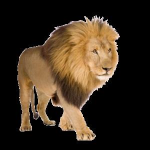 lion_PNG573