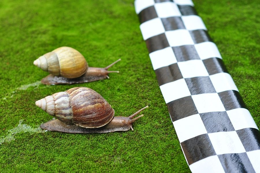 At a snail s pace