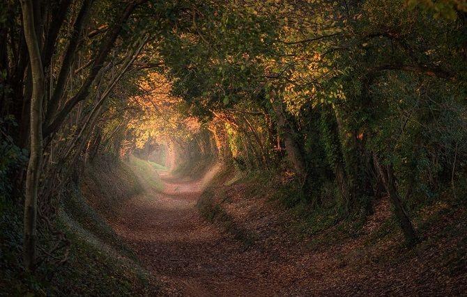 11 тоннелей мира, которые заставят познать истинную красоту природы