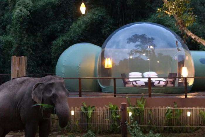 Жизнь со слонами или отель в Таиланде