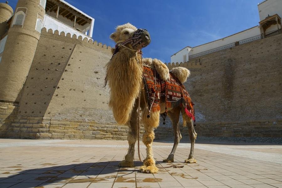 Узбекистан готов платить туристам