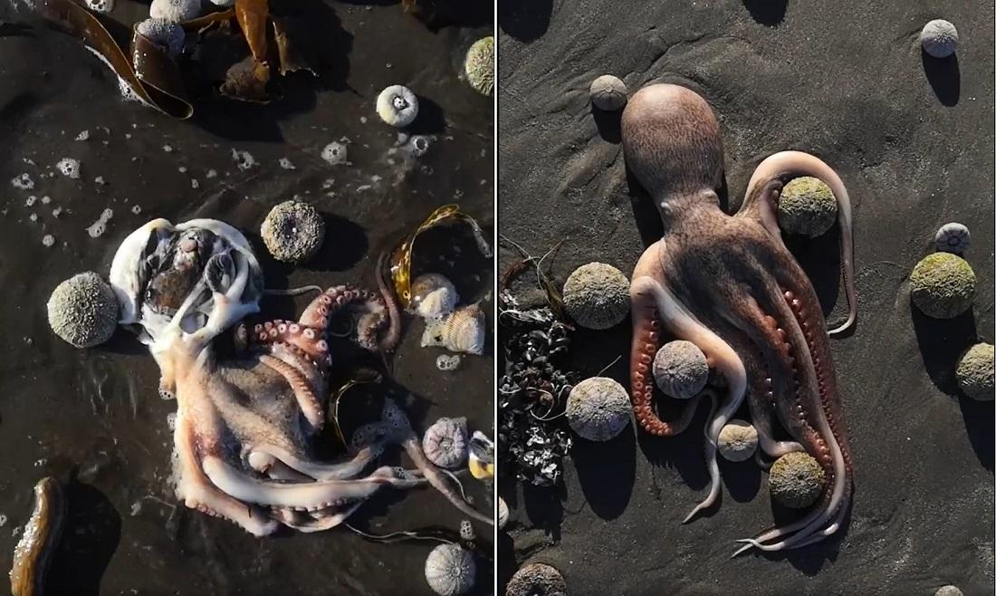 Отравленная Камчатка: горы мертвых животных, ожоги туристов