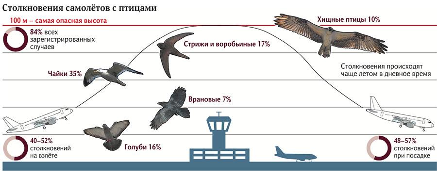 Почему опасно столкновение птицы и самолета