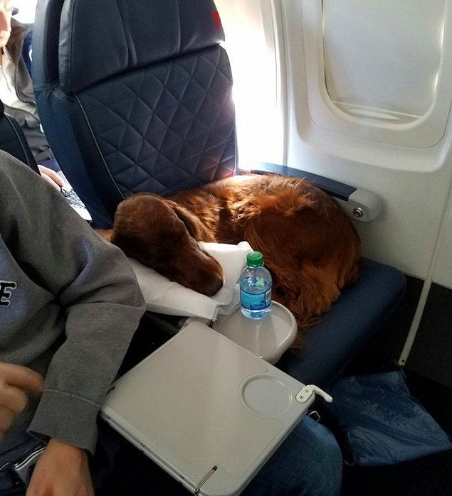 Авиакомпания S7 дала разрешение на транспортировку животных в салоне самолета