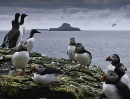 Запретный остров, на который можно смотреть только через бинокль